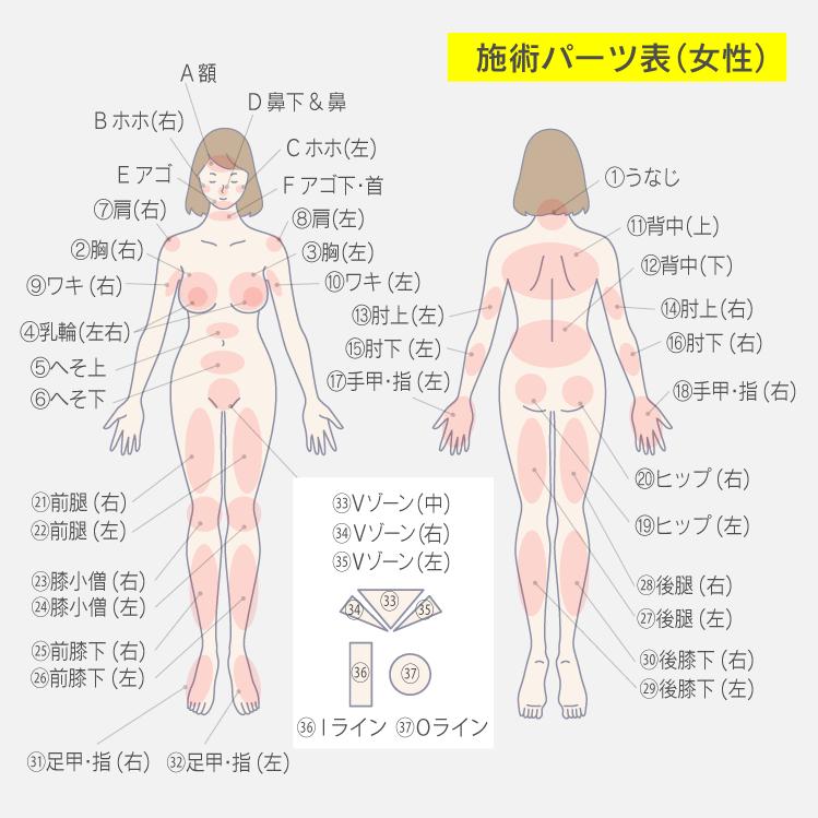 施術パーツ表(女性)